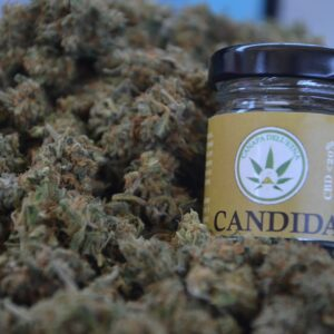 canapa legale candida marijuana light
