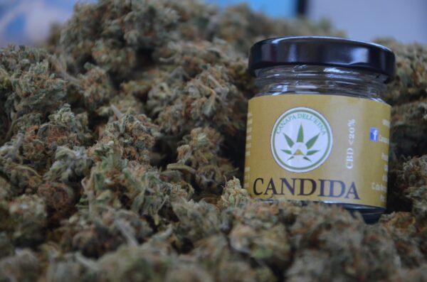 canapa legale candida marijuana light