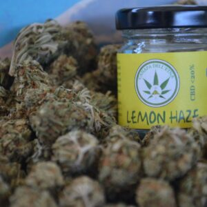 lemon haze canapa dell'etna marijuana light legale