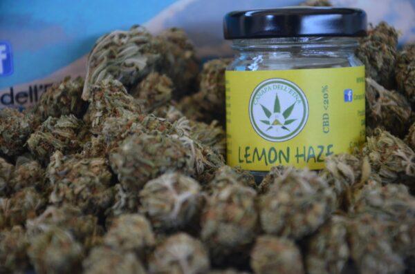 lemon haze canapa dell'etna marijuana light legale